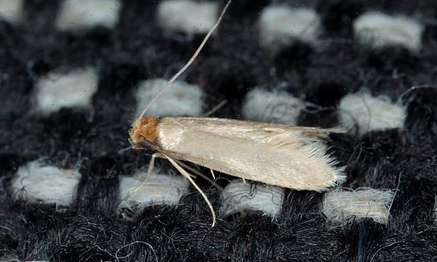 Experts share tips on protecting homes against moths during warm spell