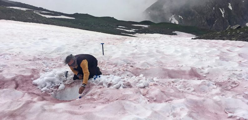 Glacier Blood? Watermelon Snow? Whatever It's Called, Snow Shouldn't Be So Red.