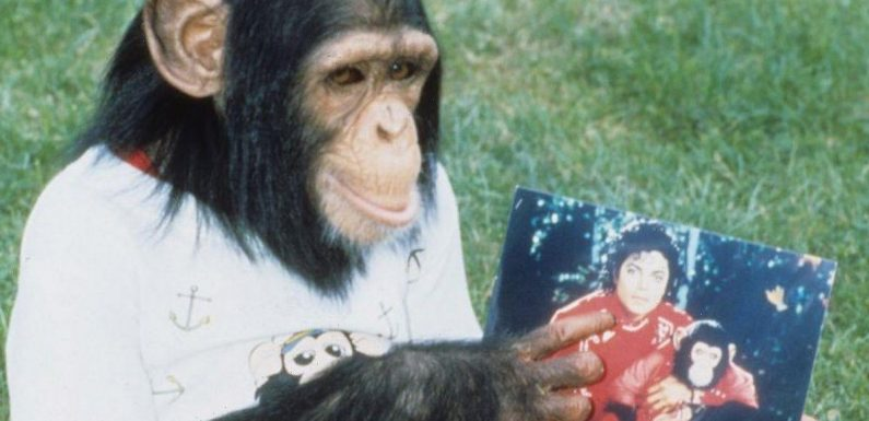 Pets who inherited millions – including Jacko's chimp Bubbles and dog with £240m