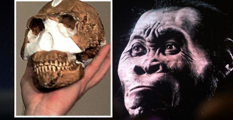 Archaeology breakthrough after researchers discovered 'totally new species' of human