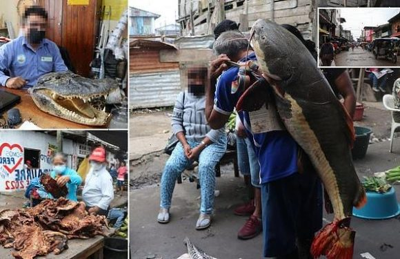 More than 200 species from the Amazon are being illegally sold in Peru